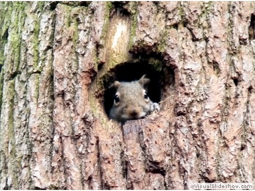 c baby squirrel in a hole